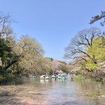 井の頭公園のオススメ花見スポット!場所取り&お役立ち情報まとめ